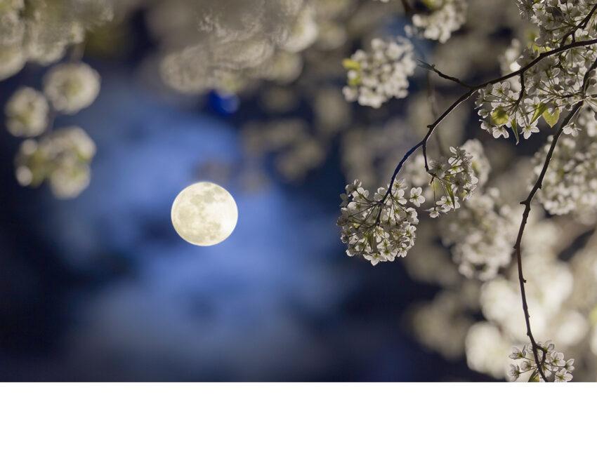 Calendrier Lunaire Juin 2020.Comment Jardiner Avec La Lune En 2020 Wemystic France